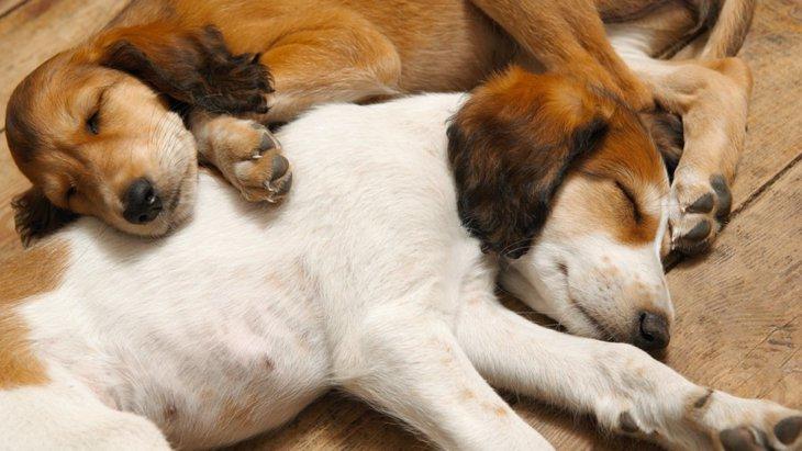 なぜ犬はお腹を触られると足をバタバタさせるの?