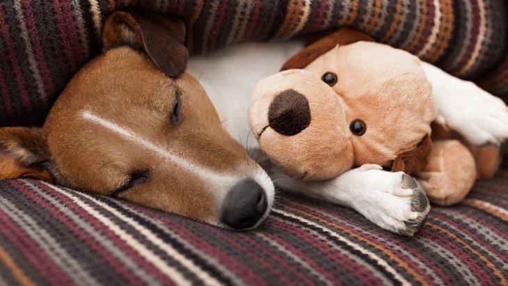 なぜ犬はぬいぐるみが好きなの?4つの理由