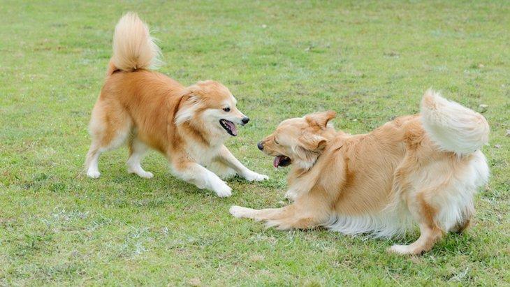 犬同士でする愛情表現4選