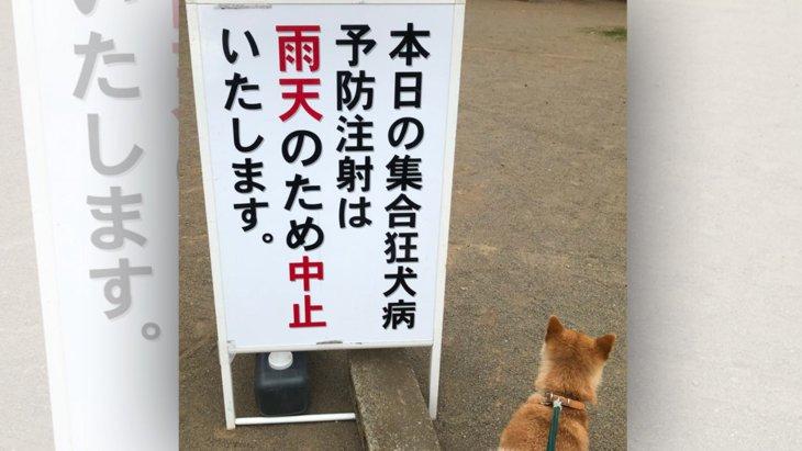 【大人気】助かった…!看板の隣に佇む柴犬さんの安堵の背中に爆笑!