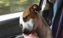 保護され助手席に座る犬。うれしい気持ちがあふれ出す...