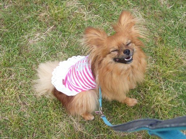 犬に服を着せるのはオシャレのためだけではない