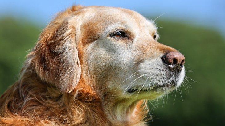 犬の老化のサインを見逃さないために!