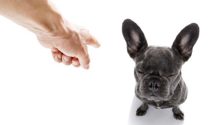犬を叱る時に必ず意識すべき『3つのコツ』