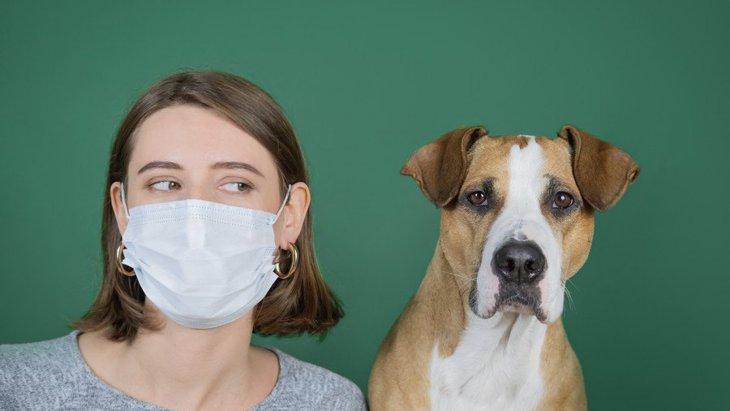 犬はマスクを着けた人を気にするだろうか?研究者による考察