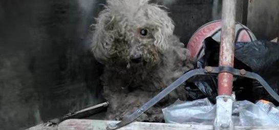 打ち捨てられ汚れた盲目の犬が、愛し愛される喜びを爆発させるまで