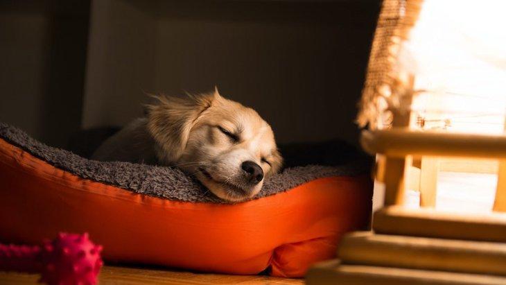 犬が快適に眠れる『ベッド』の特徴3選!正しい選び方やNG行為を解説