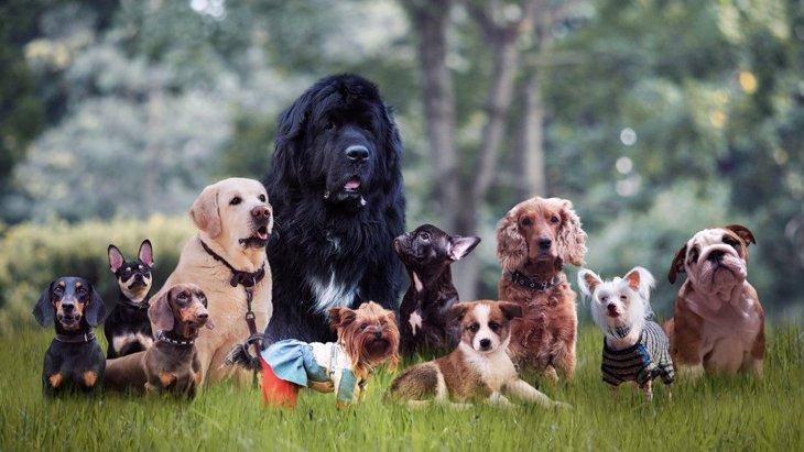 雑種犬がかわいい!ミックス犬との違いや可愛い画像集