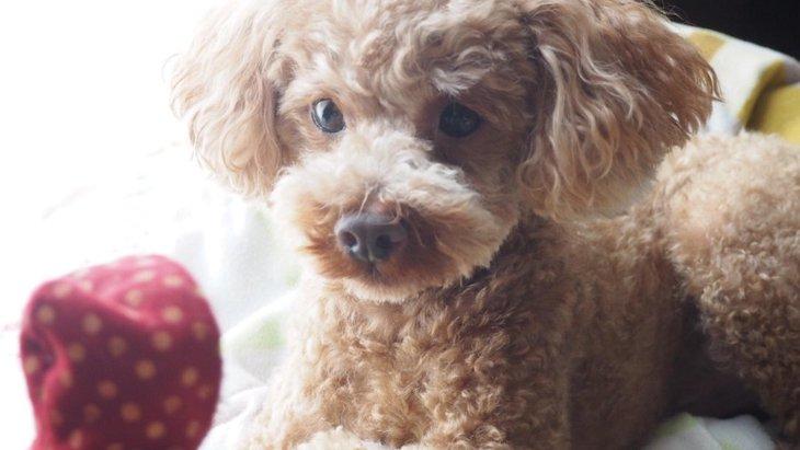 愛犬に尊敬される飼い主さんが持つ4つの特徴