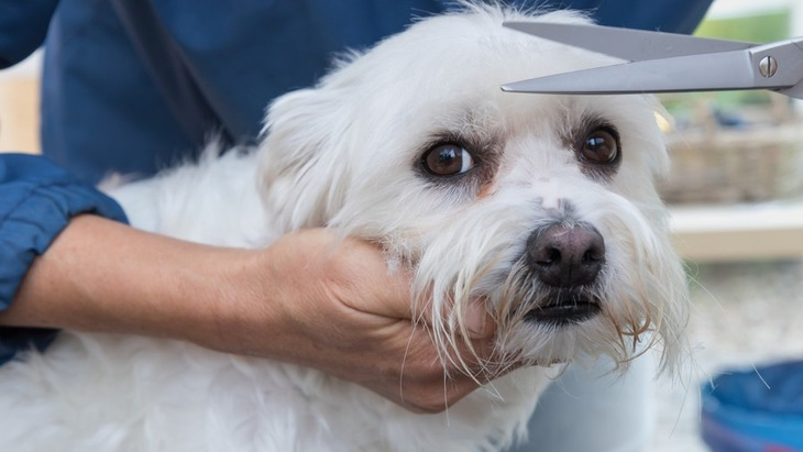 犬のトリミングは冬もするべき?カットに注意が必要な犬種とポイント