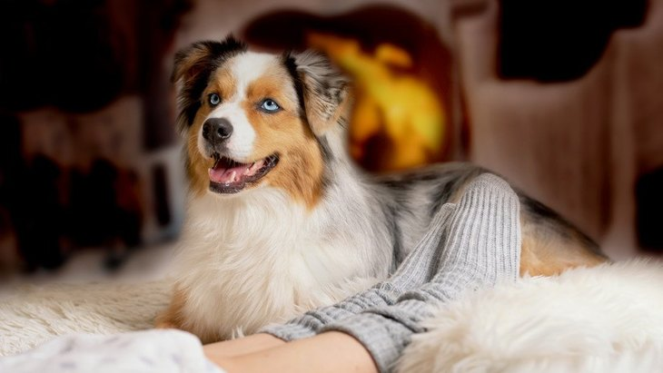 犬に絶対NGな『冬の食べ物』4選
