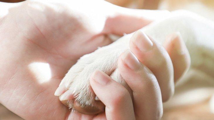 愛犬が『夢の中で死んでしまう時』の意味や心理状態3選