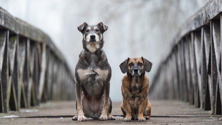 保護犬を飼う時に必ず意識しなければいけない4つのこと