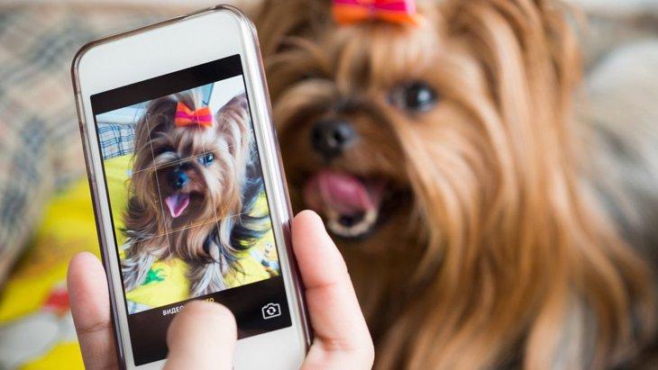 犬を『スマホ撮影』するときのNG行為3つ