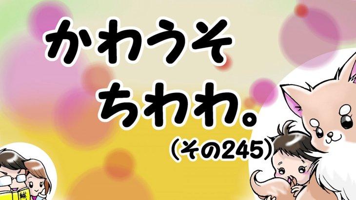 かわうそちわわ。【その245】「どうなるミントちゃん!?」