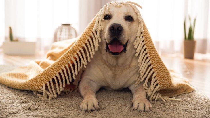 今日から始めよう!犬にできる『脳トレ』5選