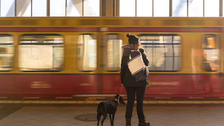イギリスの鉄道会社が進める「犬と列車の旅をしよう」ガイド