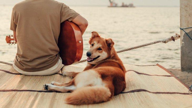 犬と一緒に音楽を楽しみたい飼い主さんが注意すべきこと4つ