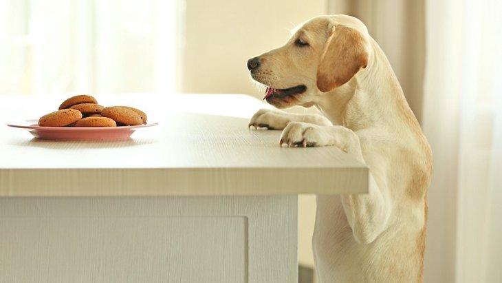 犬が飼い主が食べているものを欲しがる理由3選!与えても大丈夫なの?
