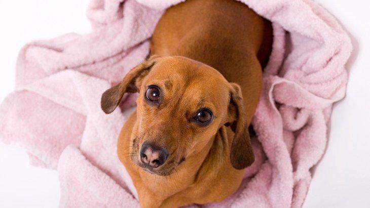 愛犬の「オシッコの色」でわかる体調のサインとは
