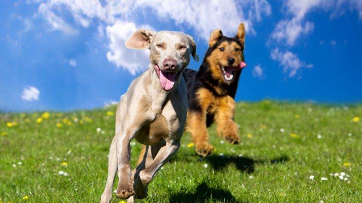 犬は他の犬のことを覚えているの?どうやって判別してる?