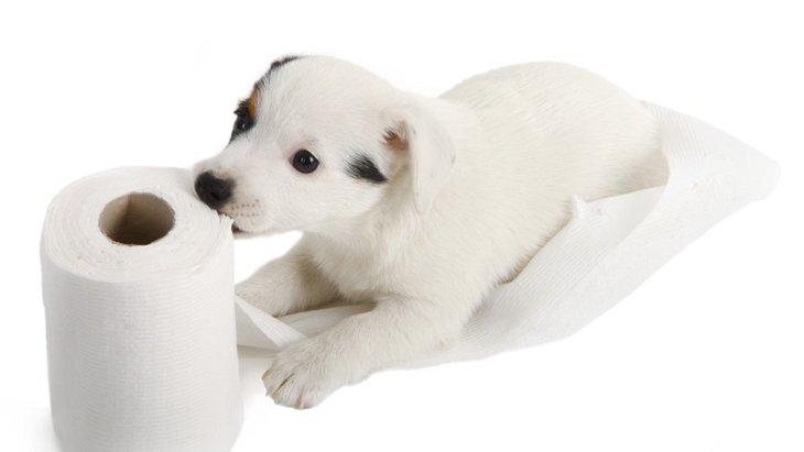 愛犬の『ウンチの色』で健康チェック!それぞれの色が出る原因とは