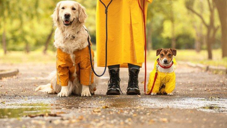 雨の日の犬の散歩で便利なグッズ7選