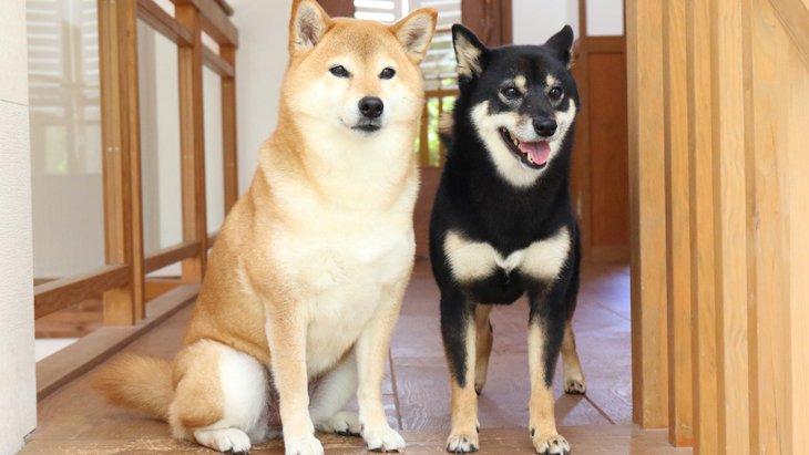 和犬の6種の天然記念物指定年月日とそれぞれの主な性格