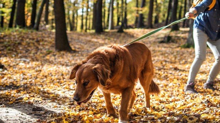 犬の飼い主なら一度は経験してる?犬の散歩でよくあること5選