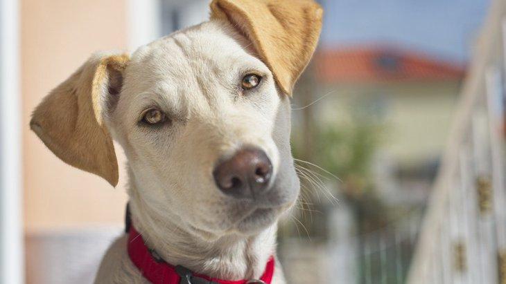 犬にNGな『首輪』5選!愛犬を苦しめている可能性も…!