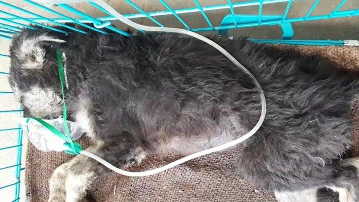 脳にダメージを受けていた子犬を保護!迅速な対応で奇跡的に回復!