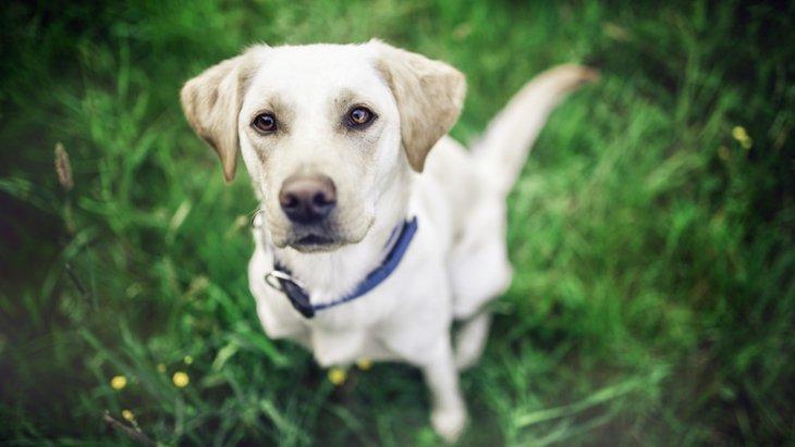 愛犬と旅行を楽しむには「しつけ」が大事!最低限やっておきたい5つのこと