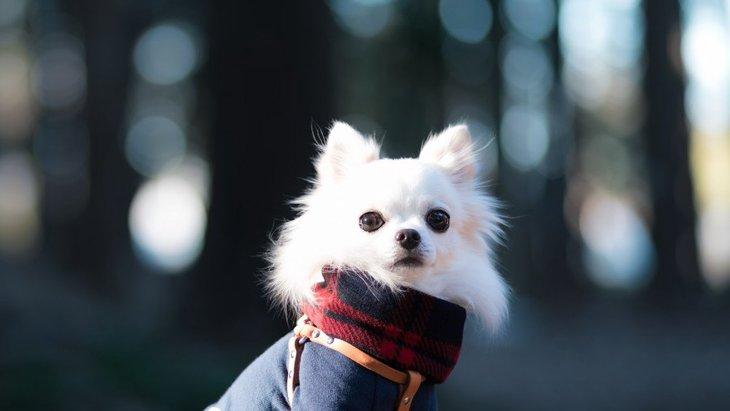 犬用のマフラーおすすめの人気商品ランキング!その選び方やハンドメイドの作り方