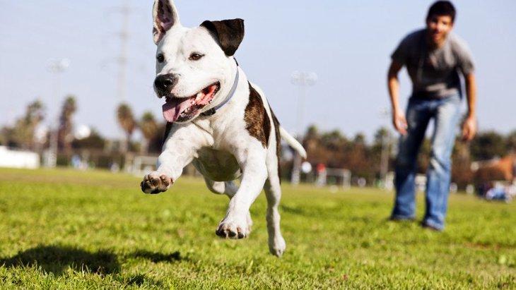 犬がマウンティングするのはなぜ?やめさせたほうがいい?