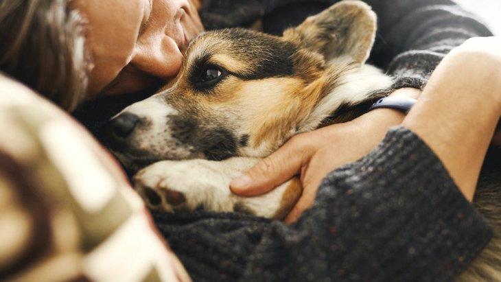 愛犬の臭い消しはどうするのが効果的?体臭ケアやお部屋の消臭方法まで
