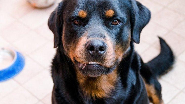 犬が『本気噛み』をする時に見せる前兆5つ