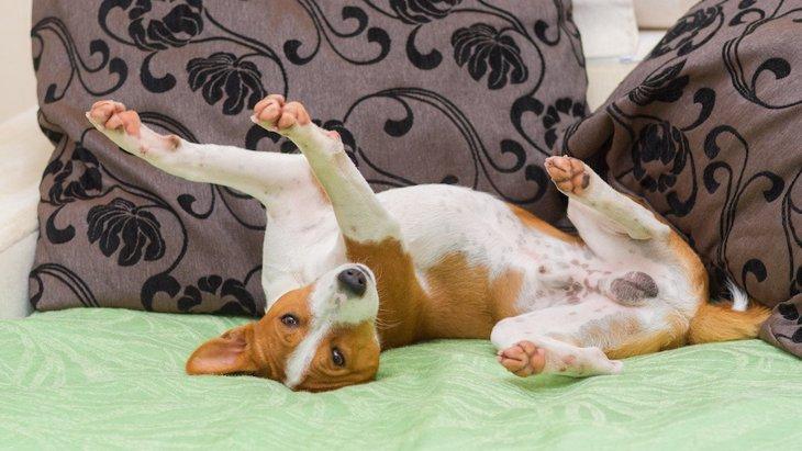 犬が寝る場所を整える理由5つ