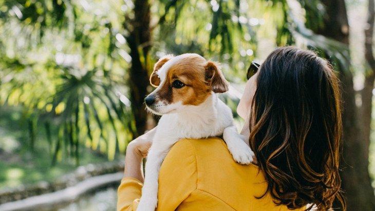 犬を抱っこしすぎると起こること3選
