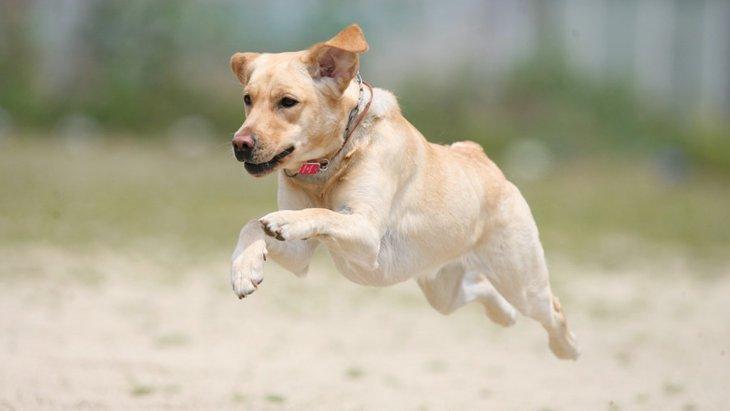 犬に「ミドリムシ」を与えることで得られる効果とは?