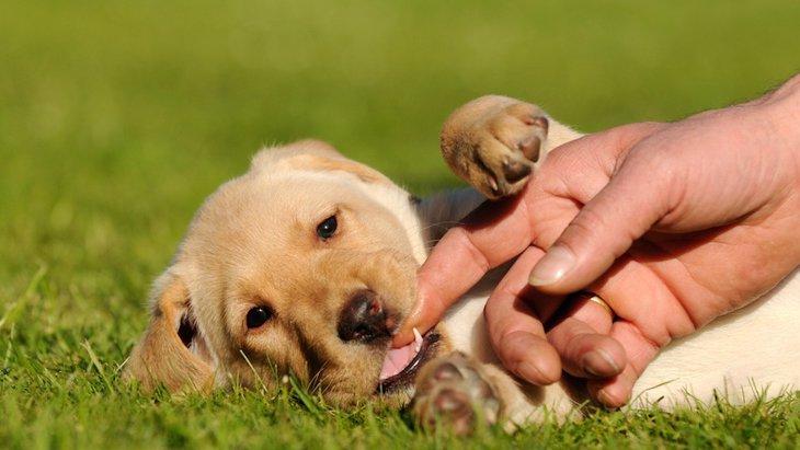 犬の乳歯の保存方法とおすすめのケース5選