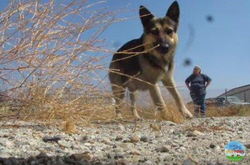 空港の敷地に長く居ついた大型犬カップル。人とのきずなを取り戻しました
