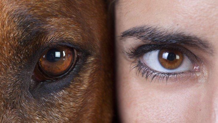 犬と人間の『目の違い』5つ