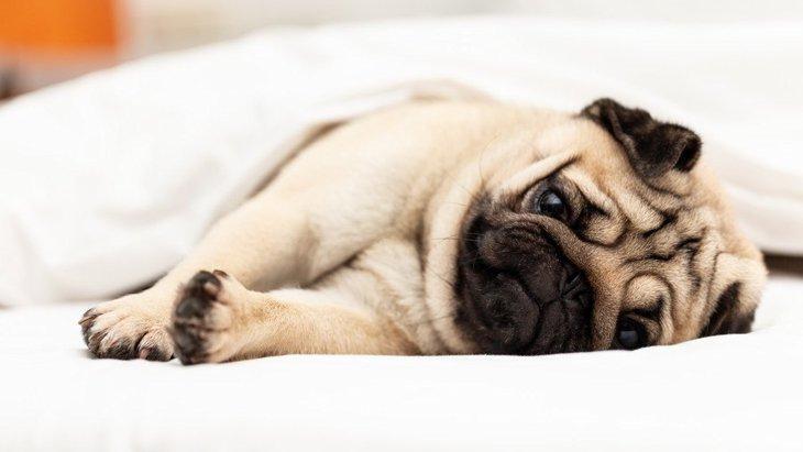 犬が突然おなかを壊した!考えられる3つの原因と適切な対処法