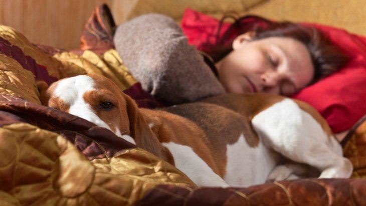 犬が添い寝をしてくる3つの心理と注意すべきこと