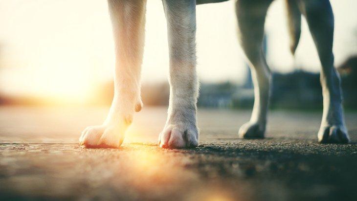 犬の足に現れる老化サイン8つ