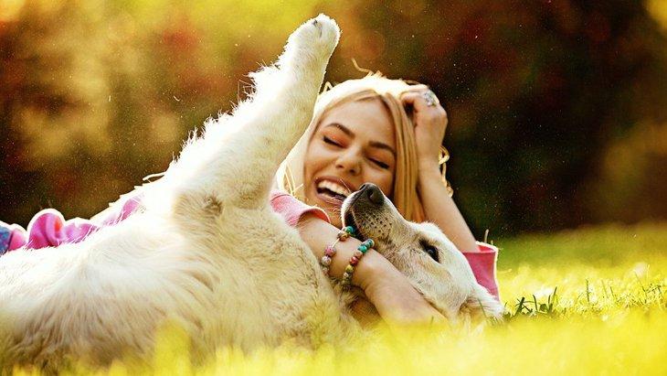 犬の歴史と人との関係とは!オオカミから人間のペットになるまで