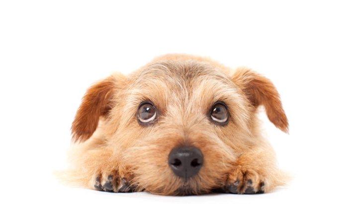 愛犬の『目の動き』で読みとる4つの気持ち