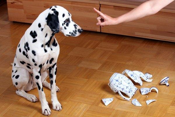 犬への罰として「ご飯抜き」にするのは大丈夫なの?