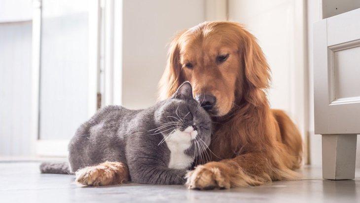 猫と同居するのに向いてる犬種7選