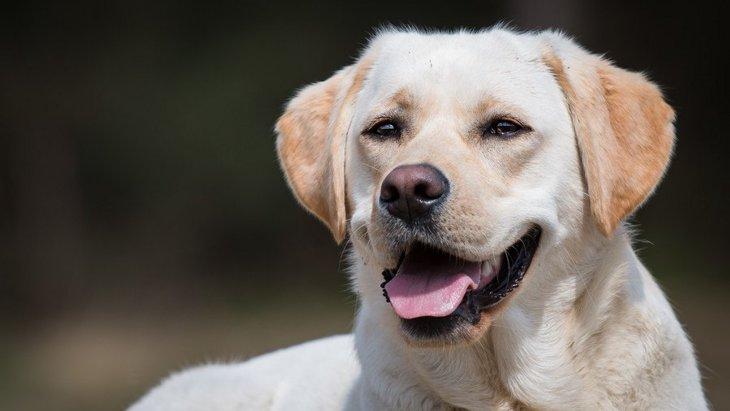 愛犬は何グループ?犬種ごとに定められている『10のグループ』を解説